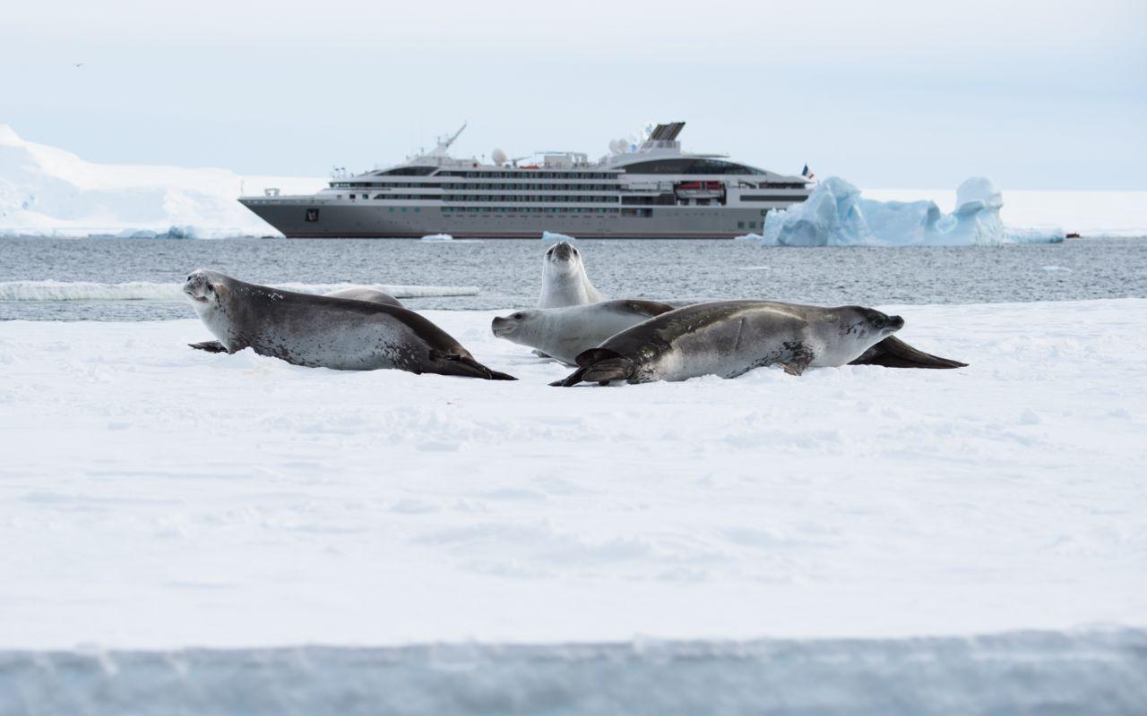 Ponant Cruises - Galeria